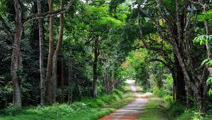 Vườn quốc gia Cúc Phương, Ninh Bình