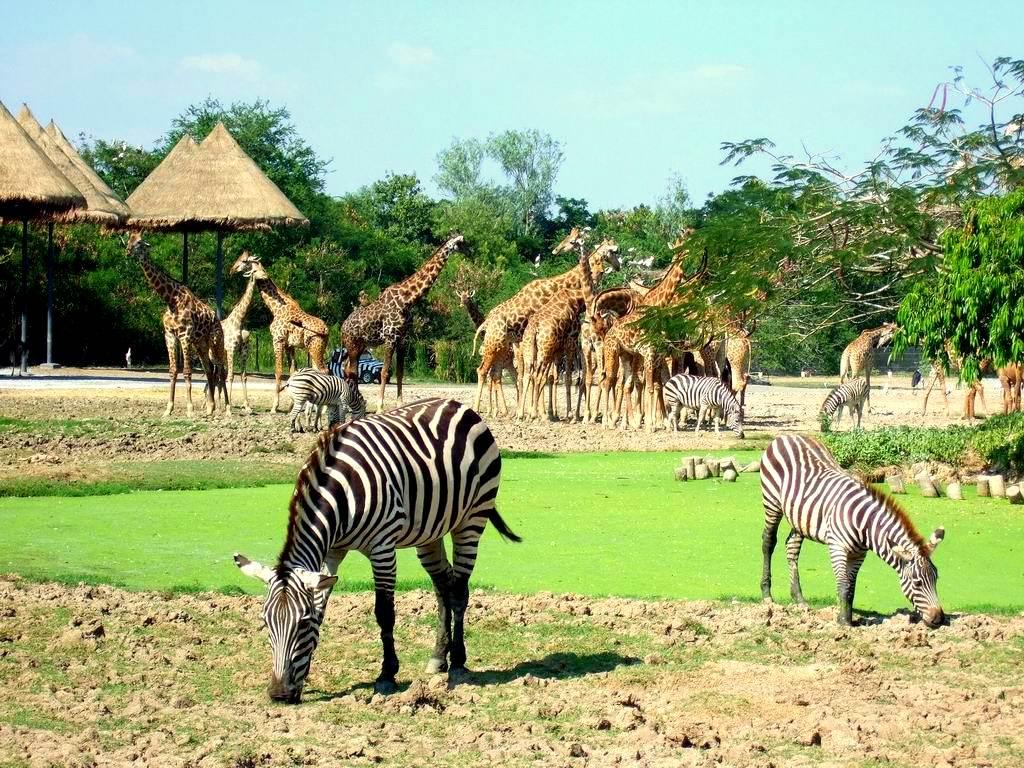 Giới thiệu về Safari Phú Quốc