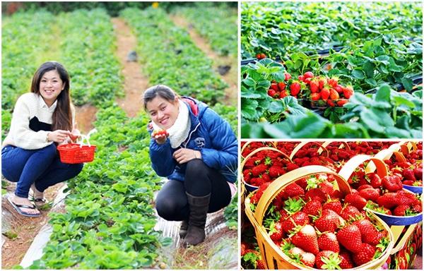 vườn rau, vườn hoa
