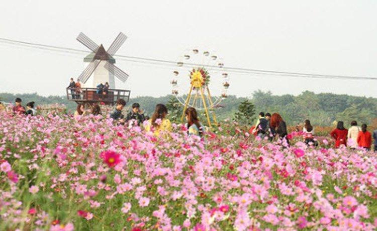 Vườn hoa bãi đá sông Hồng