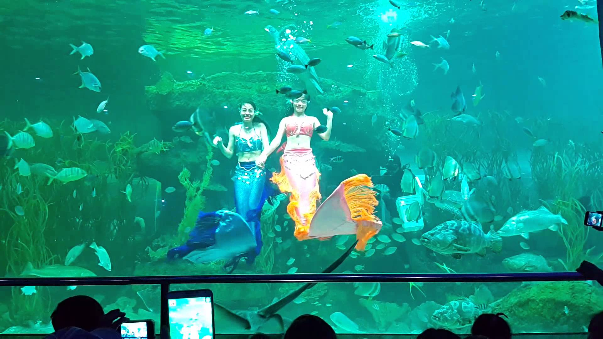 Thủy cung Vinpearl Phú Quốc