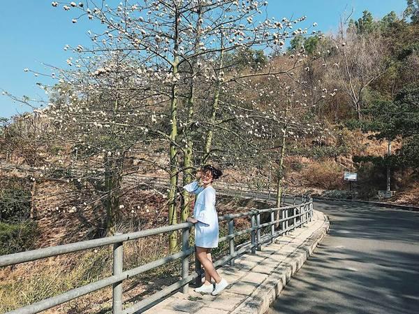 Đường cây khô