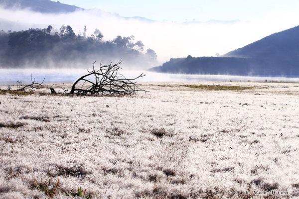 Cánh đồng cỏ tuyết