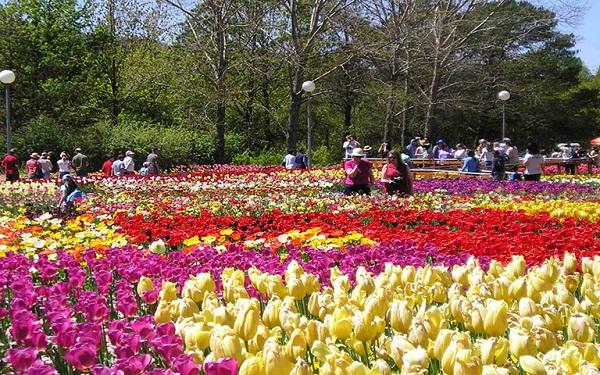 Các loài hoa ở Đà Lạt