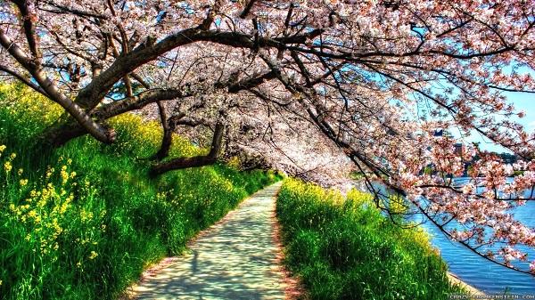 Đi Mộc Châu mùa nào đẹp nhất