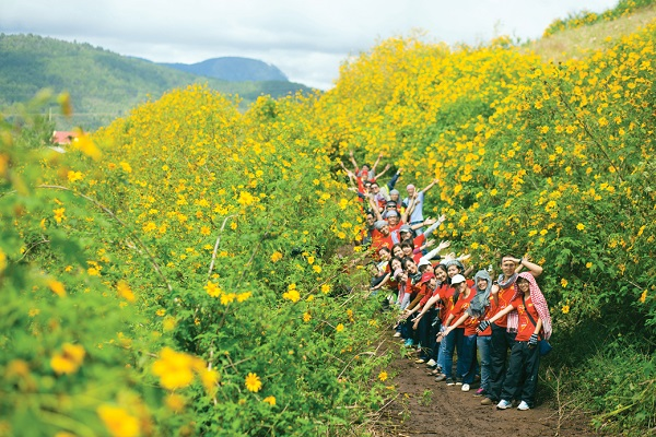 Sắc vàng rực rỡ của hoa Dã Qùy