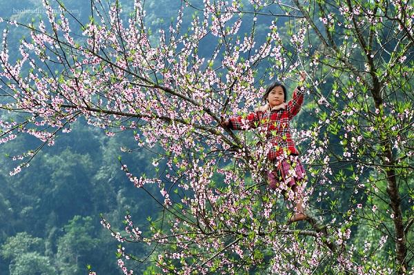 Mùa hoa mận, hoa đào