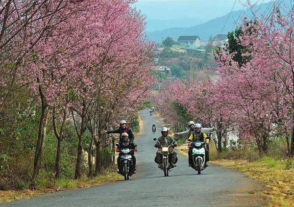 Nha Trang Đà Lạt bao nhiêu km
