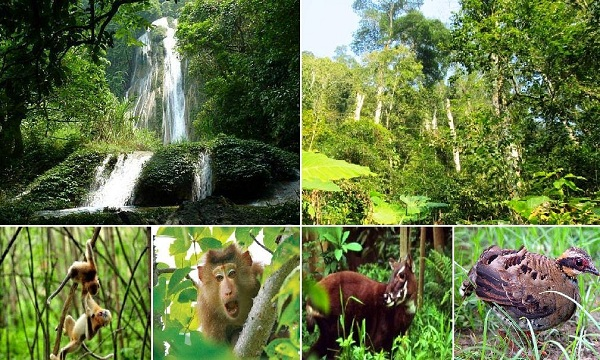 Khu nuôi bảo tồn động vật