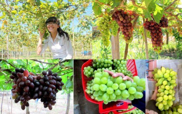 Từ Nha Trang đi Ninh Thuận bao nhiêu km