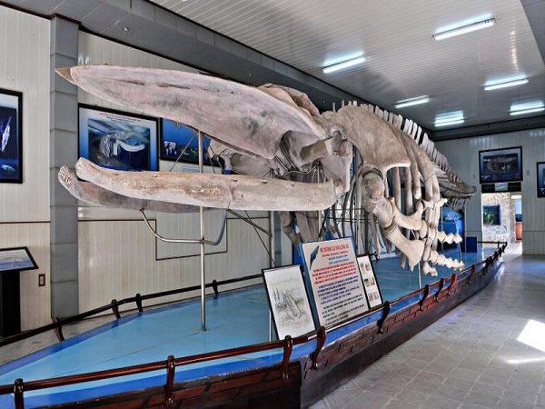 Viện Hải dương học Nha Trang