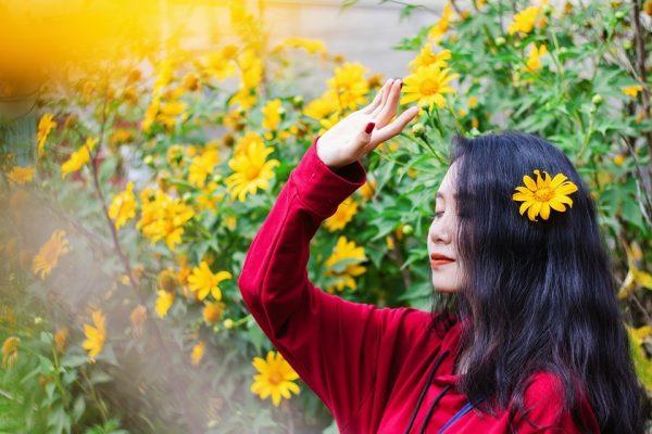 Đà Lạt mùa hoa dã quỳ,